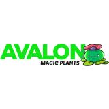 Klik hier voor de korting bij Avalonmagi ants